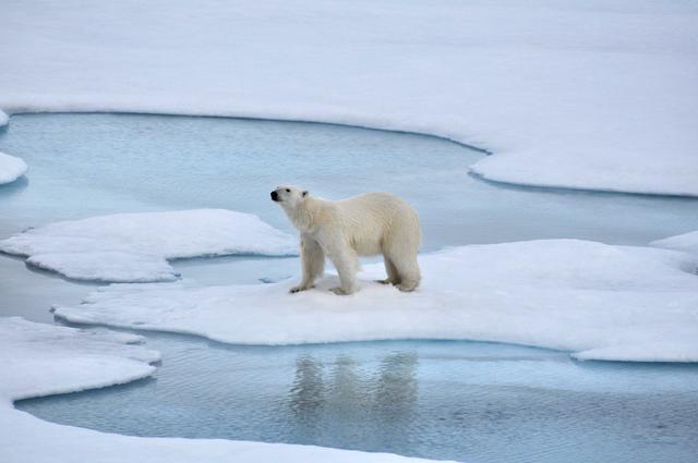 成立南北极联盟 飞猪想用深化目的地IP下一盘大棋